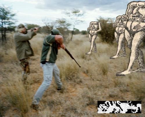 hunting lion, kalahari, northern cape, south africa